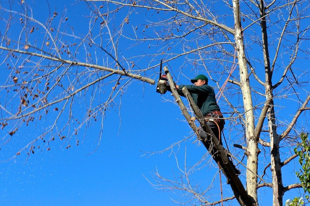 Contact Us-Polk City FL Tree Trimming and Stump Grinding Services-We Offer Tree Trimming Services, Tree Removal, Tree Pruning, Tree Cutting, Residential and Commercial Tree Trimming Services, Storm Damage, Emergency Tree Removal, Land Clearing, Tree Companies, Tree Care Service, Stump Grinding, and we're the Best Tree Trimming Company Near You Guaranteed!