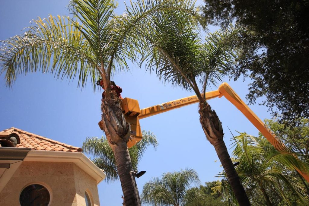 Palm Tree Trimming-Polk City FL Tree Trimming and Stump Grinding Services-We Offer Tree Trimming Services, Tree Removal, Tree Pruning, Tree Cutting, Residential and Commercial Tree Trimming Services, Storm Damage, Emergency Tree Removal, Land Clearing, Tree Companies, Tree Care Service, Stump Grinding, and we're the Best Tree Trimming Company Near You Guaranteed!