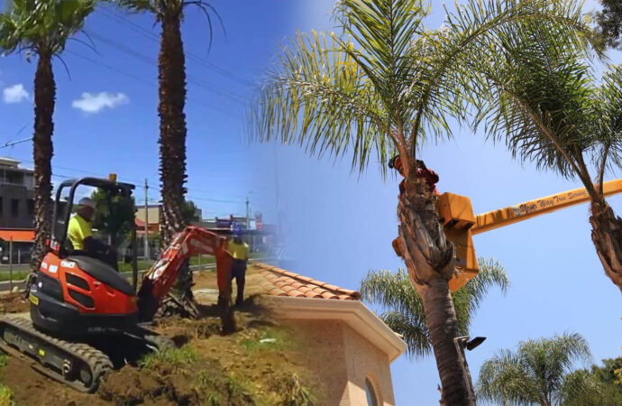 Palm tree trimming & palm tree removal-Polk City FL Tree Trimming and Stump Grinding Services-We Offer Tree Trimming Services, Tree Removal, Tree Pruning, Tree Cutting, Residential and Commercial Tree Trimming Services, Storm Damage, Emergency Tree Removal, Land Clearing, Tree Companies, Tree Care Service, Stump Grinding, and we're the Best Tree Trimming Company Near You Guaranteed!