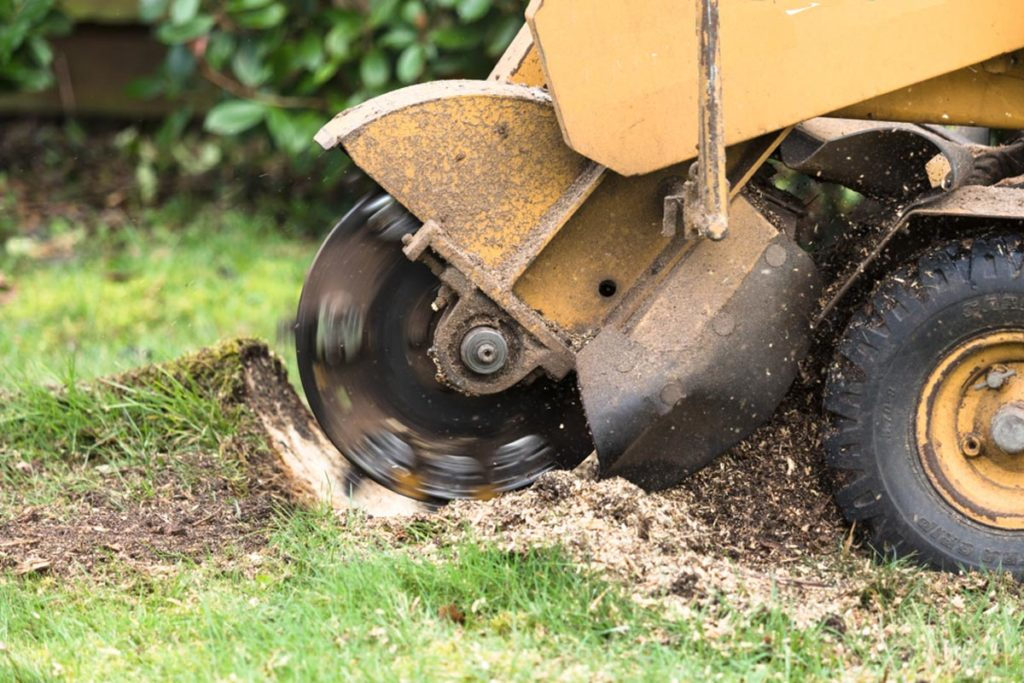Stump Grinding-Polk City FL Tree Trimming and Stump Grinding Services-We Offer Tree Trimming Services, Tree Removal, Tree Pruning, Tree Cutting, Residential and Commercial Tree Trimming Services, Storm Damage, Emergency Tree Removal, Land Clearing, Tree Companies, Tree Care Service, Stump Grinding, and we're the Best Tree Trimming Company Near You Guaranteed!