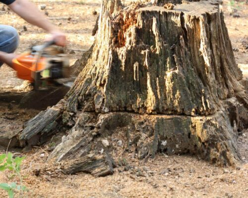 Stump Removal-Polk City FL Tree Trimming and Stump Grinding Services-We Offer Tree Trimming Services, Tree Removal, Tree Pruning, Tree Cutting, Residential and Commercial Tree Trimming Services, Storm Damage, Emergency Tree Removal, Land Clearing, Tree Companies, Tree Care Service, Stump Grinding, and we're the Best Tree Trimming Company Near You Guaranteed!