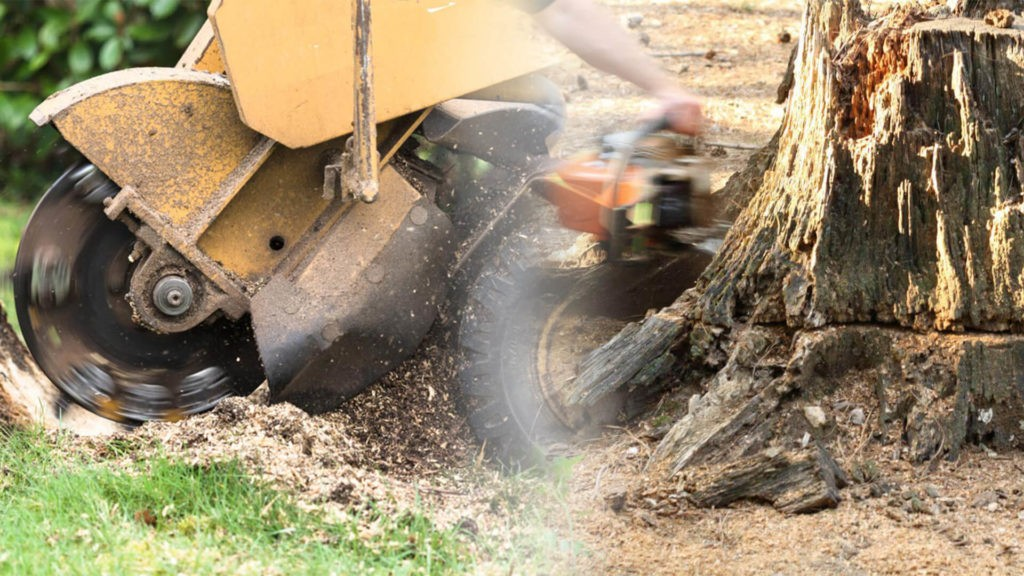 Stump grinding & removal-Polk City FL Tree Trimming and Stump Grinding Services-We Offer Tree Trimming Services, Tree Removal, Tree Pruning, Tree Cutting, Residential and Commercial Tree Trimming Services, Storm Damage, Emergency Tree Removal, Land Clearing, Tree Companies, Tree Care Service, Stump Grinding, and we're the Best Tree Trimming Company Near You Guaranteed!