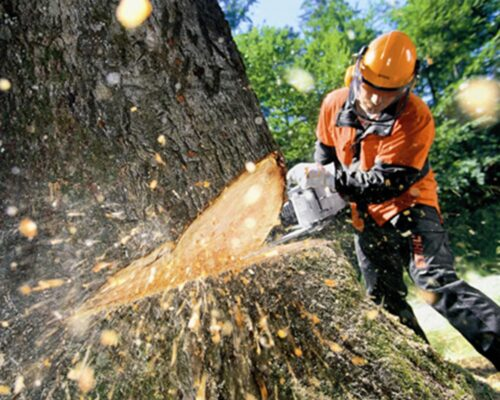 Tree Cutting-Polk City FL Tree Trimming and Stump Grinding Services-We Offer Tree Trimming Services, Tree Removal, Tree Pruning, Tree Cutting, Residential and Commercial Tree Trimming Services, Storm Damage, Emergency Tree Removal, Land Clearing, Tree Companies, Tree Care Service, Stump Grinding, and we're the Best Tree Trimming Company Near You Guaranteed!