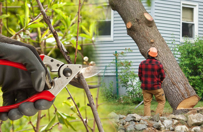 Tree pruning & tree removal-Polk City FL Tree Trimming and Stump Grinding Services-We Offer Tree Trimming Services, Tree Removal, Tree Pruning, Tree Cutting, Residential and Commercial Tree Trimming Services, Storm Damage, Emergency Tree Removal, Land Clearing, Tree Companies, Tree Care Service, Stump Grinding, and we're the Best Tree Trimming Company Near You Guaranteed!